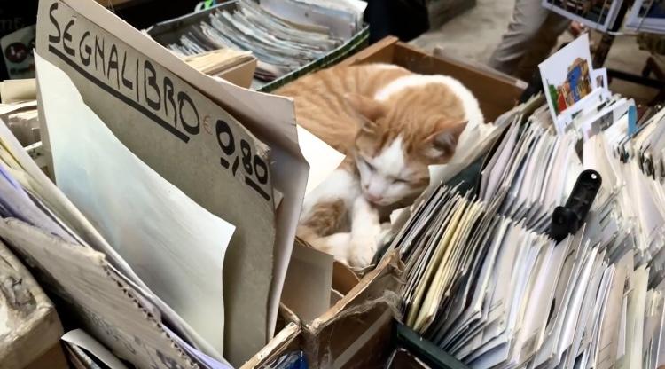 Libreria-acqua-alta-whynot-shopper-venecia-libros-segunda-mano-lifestyle -gatos-felinos-Luigi-Frizzo